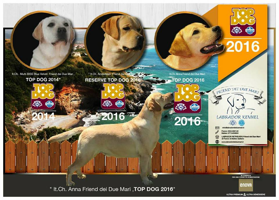 top dog locandina