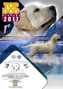 aurora-top-dog-giovani-2017