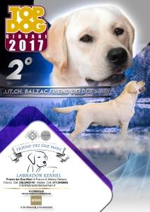balzac-top-dog-giovani-2017