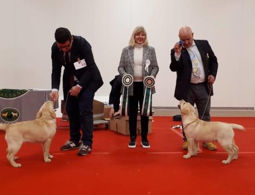 Romagna Winner 2018